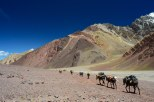 Passed by the mules as we exit to Penitientes
