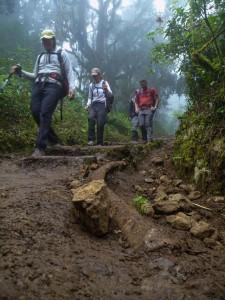Kilimanjaro-1010379