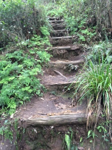 Heading home - the last ascent out of the Grose Valley.  Endless steps up to Perry's Lokdown